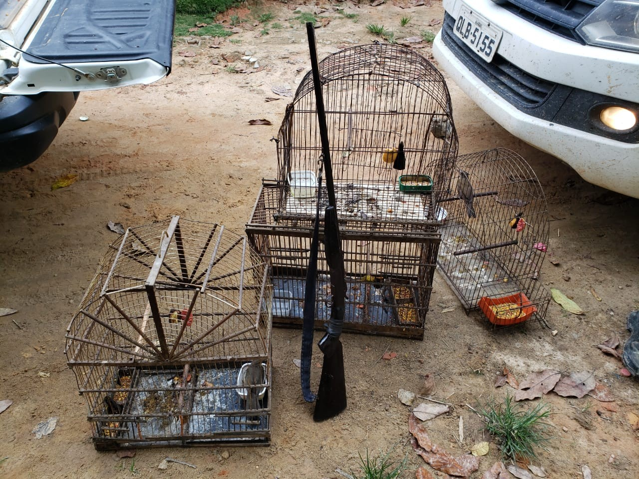 Homem é preso por caça ilegal de aves e tenta esfaquear agente do ICMBio em Murici, AL