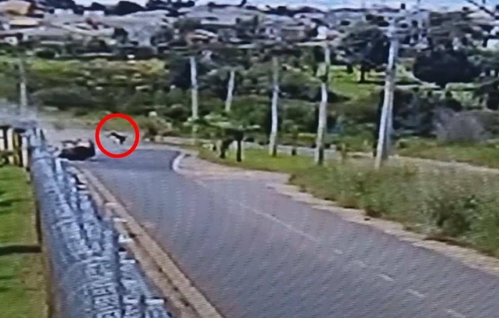 Além de uma criança, outro passageiro do carro também foi arremessado após acidente em Rio Preto (Foto: Reprodução/TV TEM)