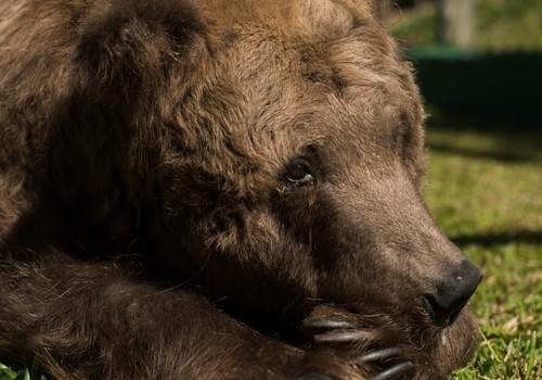 ursa rowena rancho dos gnomos (Foto:  Biga Pessoa/ Rancho dos Gnomos)