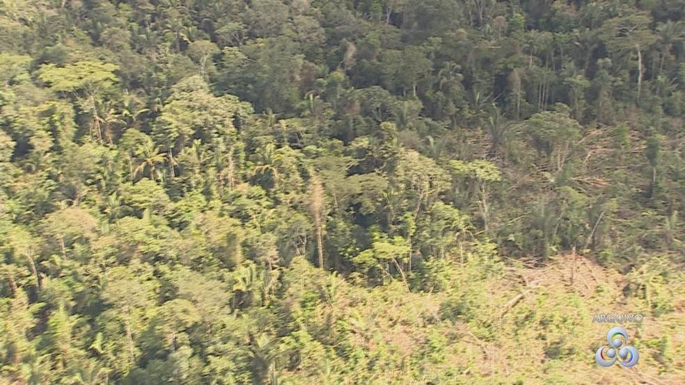 Reserva indígena Karipuna (Foto: Reprodução/ Rede Amazônica)