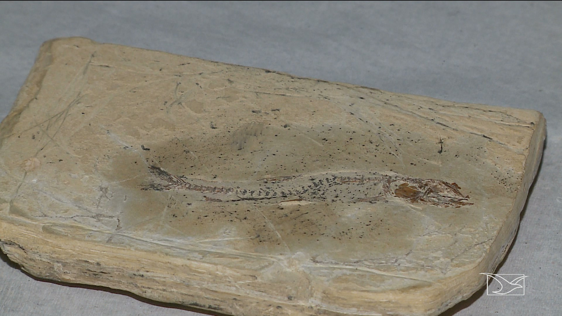 Fósseis de 113 milhões de anos são encontrados em Presidente Dutra, no Maranhão