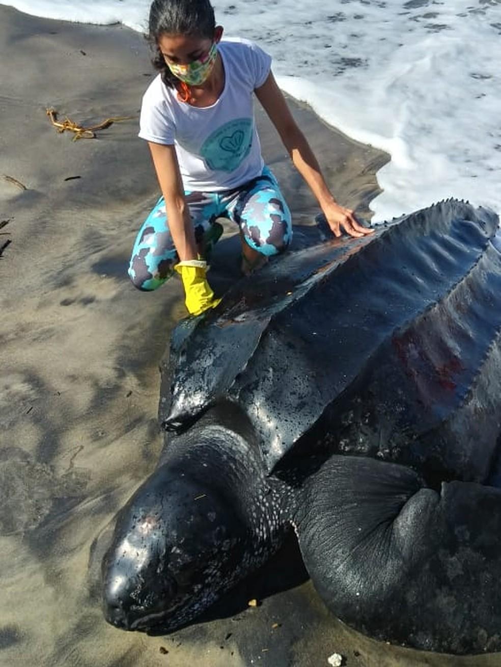 Ameaçada de extinção, tartaruga rara é encontrada encalhada em praia na Bahia  — Foto: (A)mar/Divulgação
