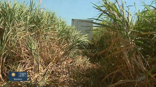 Carga de carne roubada de caminhão frigorífico é encontrada em distribuidora de Dumont, SP