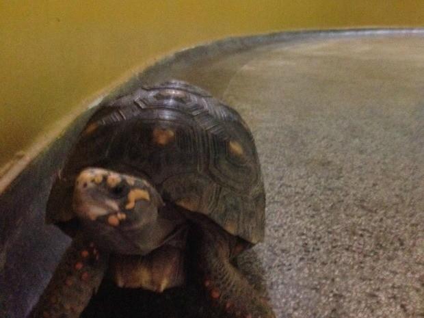 Animal não fica inibido com a presença dos visitantes (Fot Cassyo Sonda/ Centro América FM)