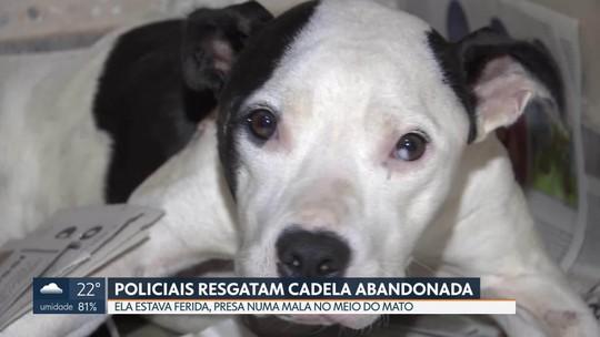 Chacareiro encontra cadela ferida em mala no Lago Norte