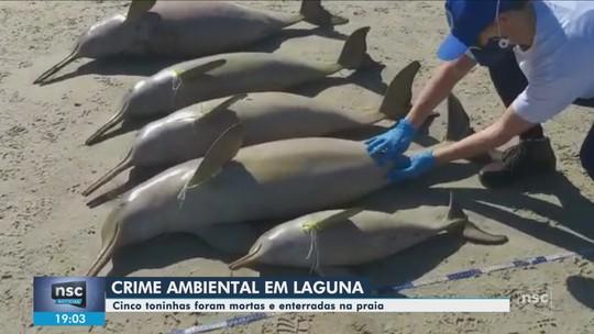Toninhas são encontradas mortas em praia de SC; uma estava grávida