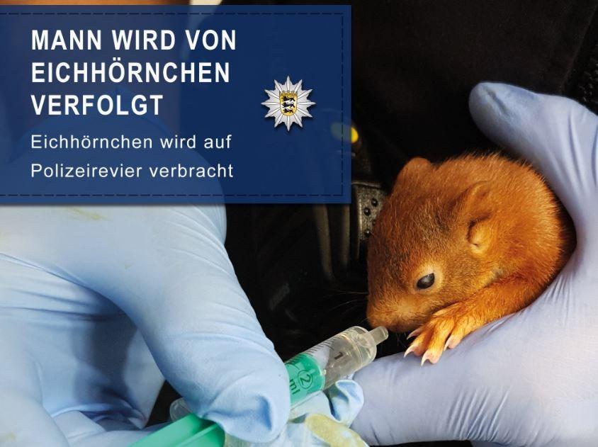 Esquilo virou mascote da polícia de Karlsruhe. (Foto: EPA/Karlsruhe Police)