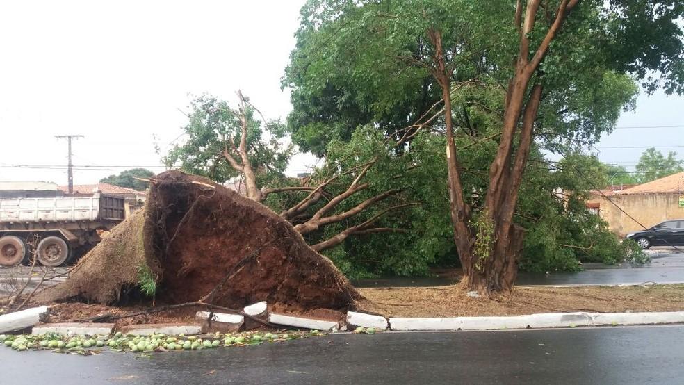 Árvores caíram durante temporal (Foto: Gleyce Santos/ TVCA)