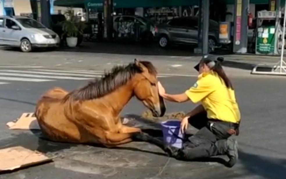 Agente de trânsito chama atenção após se sentar ao lado de égua que sofreu acidente, em Goiânia, Goiás — Foto: TV Anhanguera/Divulgação