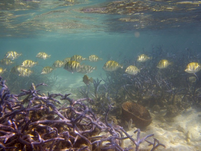 Pesquisadores analisaram tendências para recifes de corais e ecossistemas do mundo todo  (Foto: Tyler Eddy)