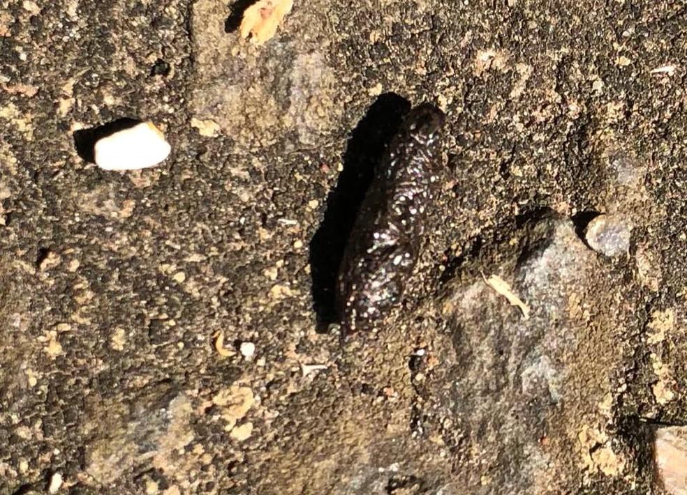 Fezes de rato foram encontradas em escola da rede municipal de Paulínia (Foto: Arquivo pessoal)
