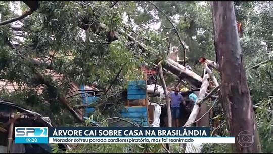 Morador de Brasilândia quase morreu por causa da queda de uma árvore