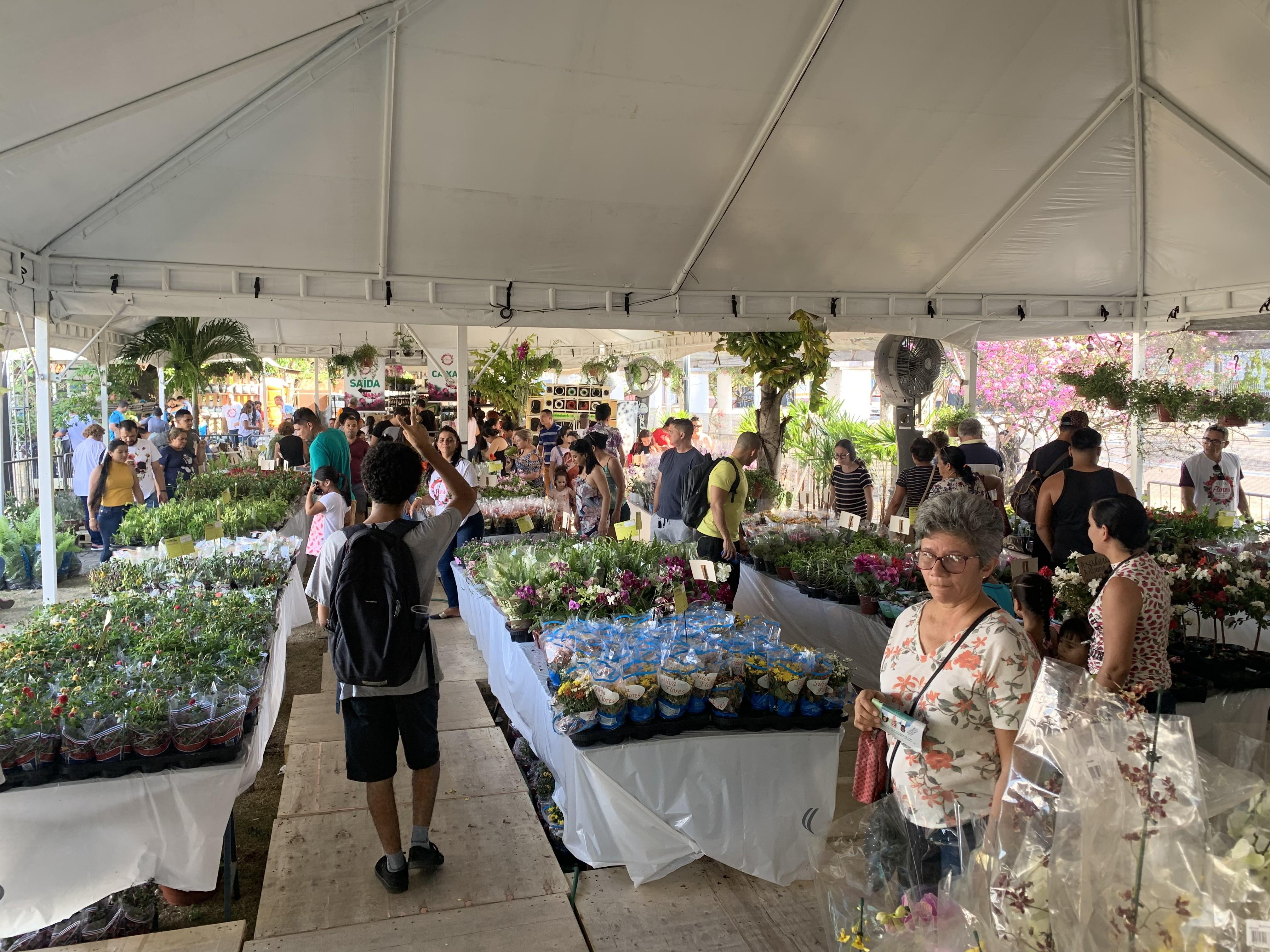 Feira de Flores de Holambra reúne mais de 250 espécies de flores e plantas para venda no Centro de Manaus - Notícias - Plantão Diário