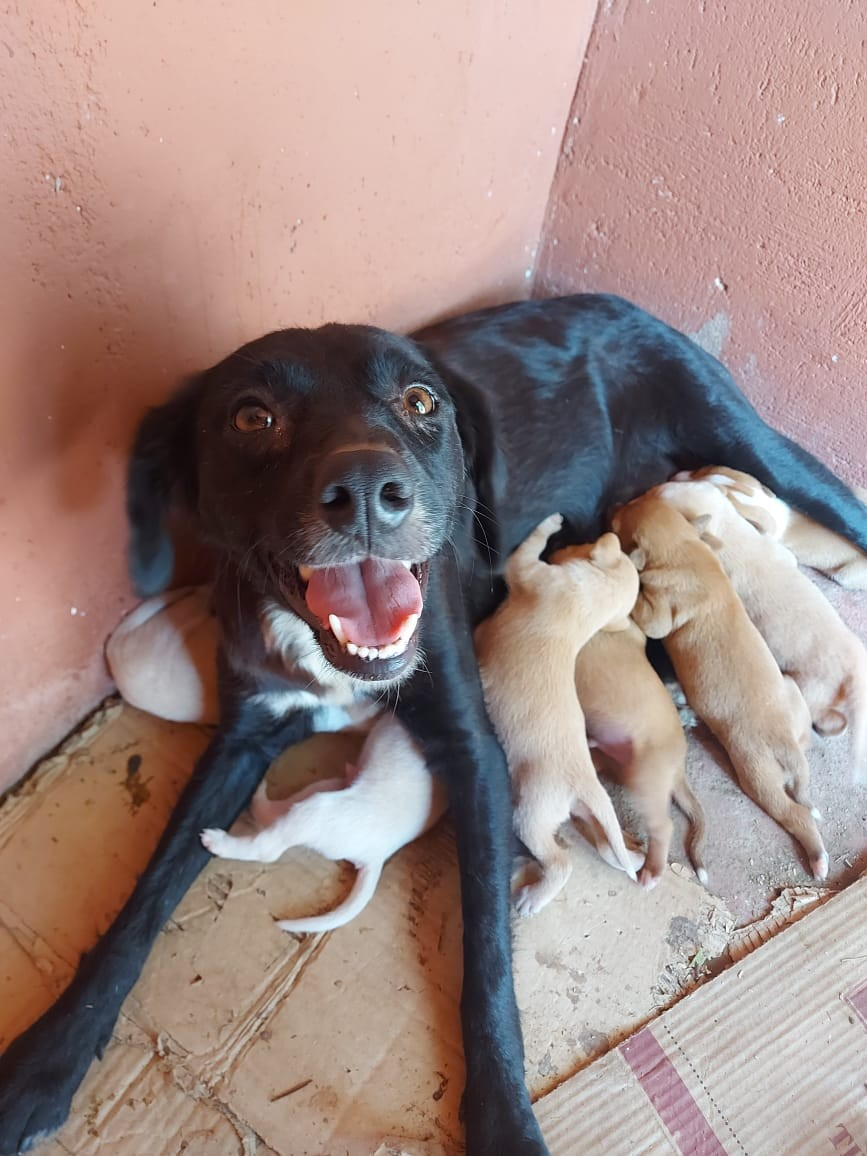Policiais militares resgatam cadela e filhotes e salvam vida deles em Sairé