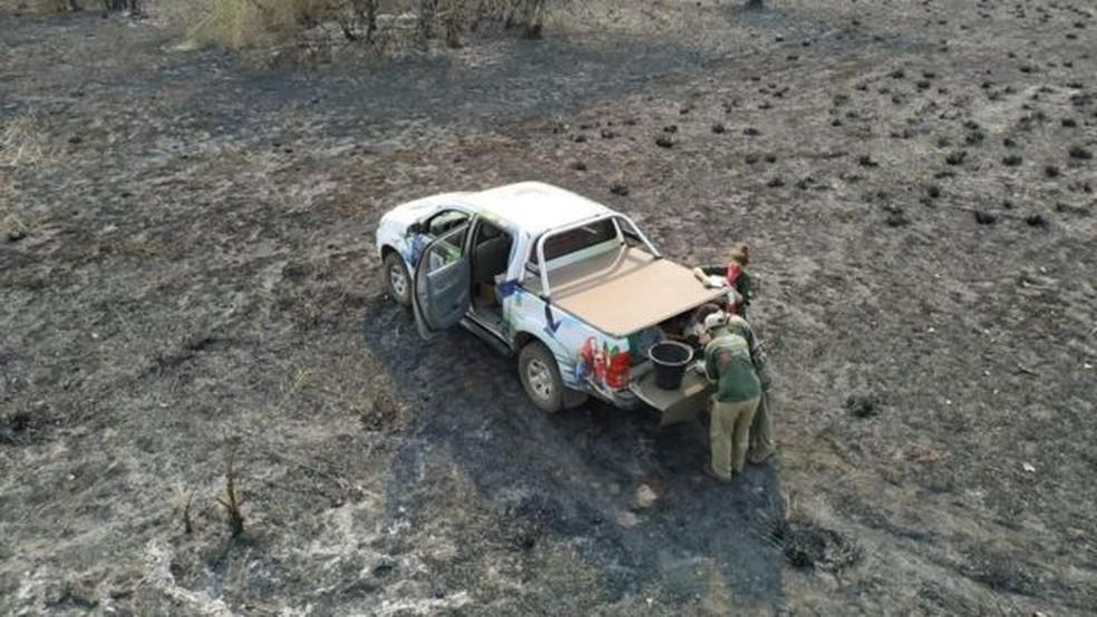 Equipe do Instituto Arara Azul monitora destruição após queimadas — Foto: Instituto Arara Azul
