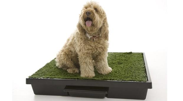 Pet Loo: tenha um jardim dentro da sua casa (Foto: Divulgação )