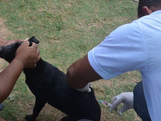 Vacinação antirrábica em postos fixos de Aracaju segue até o dia 27; confira programação - Notícias - Plantão Diário