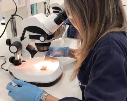 Aprovado o uso de mini-cápsula com ovos para controle de insetos