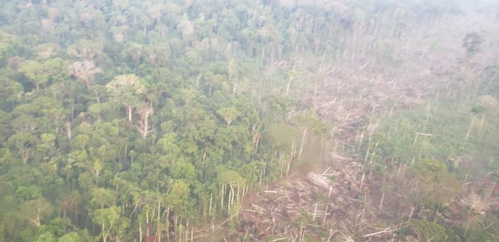 Área desmatada pelo grupo criminoso em Rondônia — Foto: PF/Divulgação