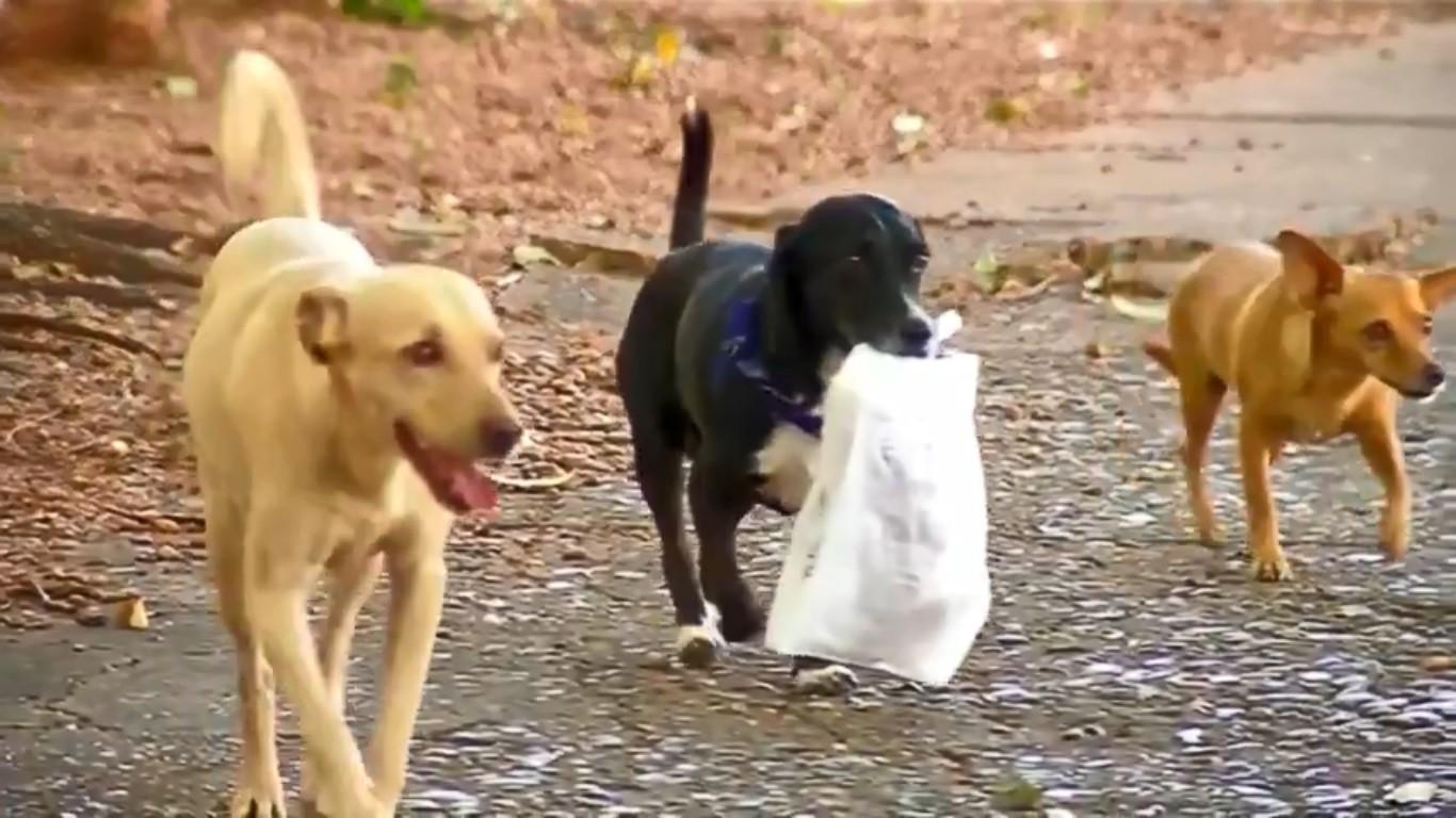 Vira-lata chama atenção de moradores ao levar sacola de pães para a dona no interior de SP