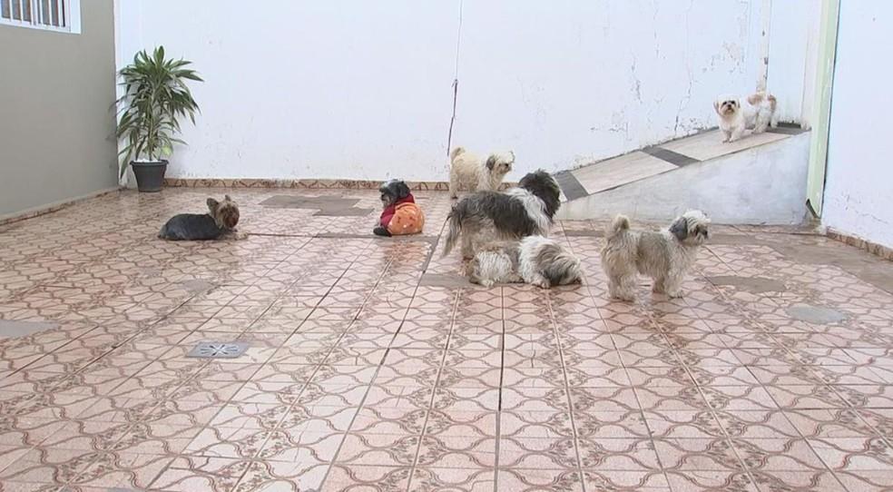 Segundo Thais, os animais são mais sensíveis aos produtos usados na limpeza da casa (Foto: Reprodução/TV TEM)