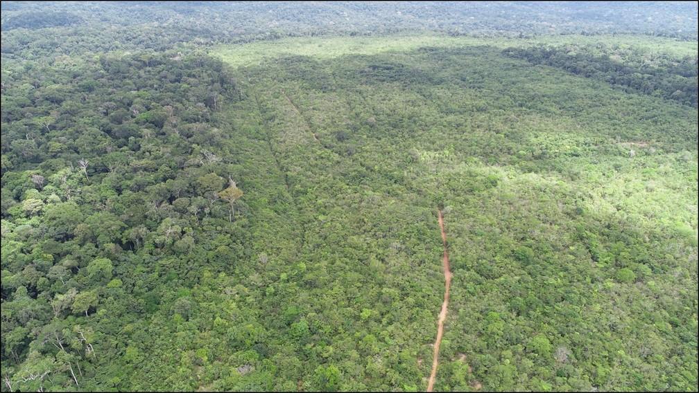 Área reflorestada do Platô Papagaio — Foto: MRN/Divulgação