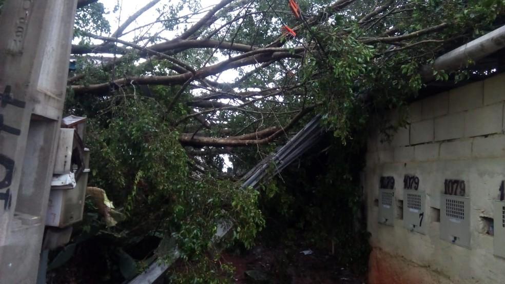 Árvore caiu sobre casa no Igarapés em Jacareí — Foto: Divulgação/ Prefeitura de Jacareí