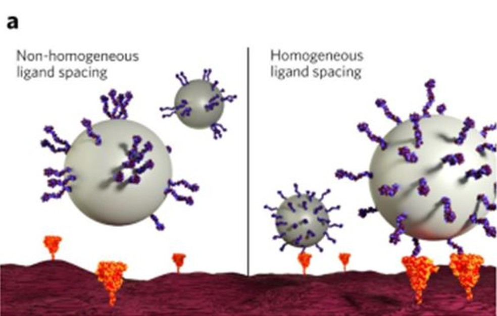 Ilustração de uma distribuição não-homogênea dos grupos ativos na superfície da nanopartícula, que diminui a probabilidade de eventos de reconhecimento específico (à esq.), em comparação com um arranjo homogêneo dos grupos ativos — Foto: Arte/CNPEM
