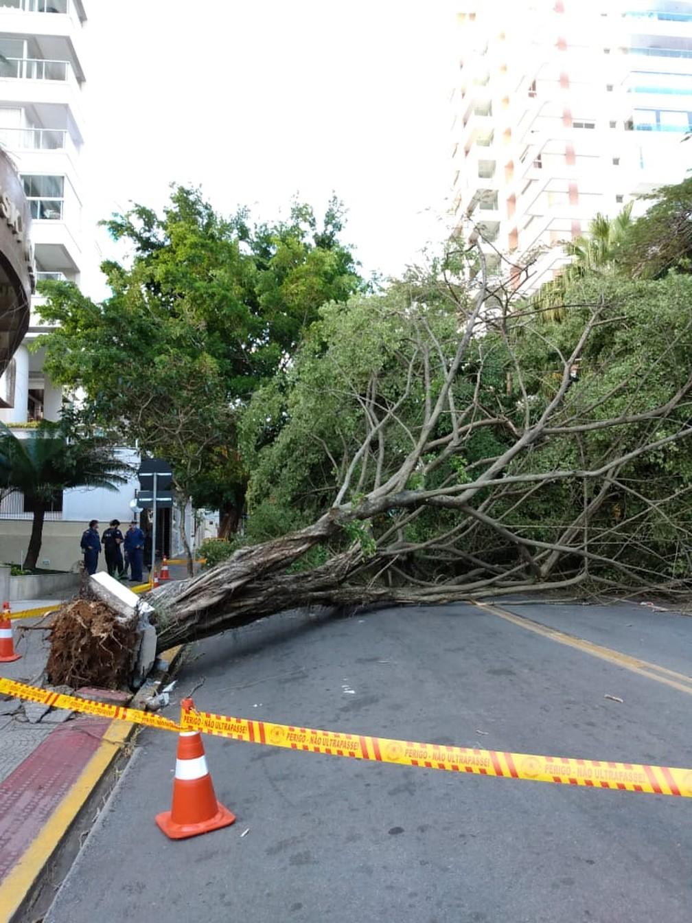 Avenida Trompowsky, no Centro de Florianópolis interditada por causa da queda de árvore — Foto: PMF/ Divulgação