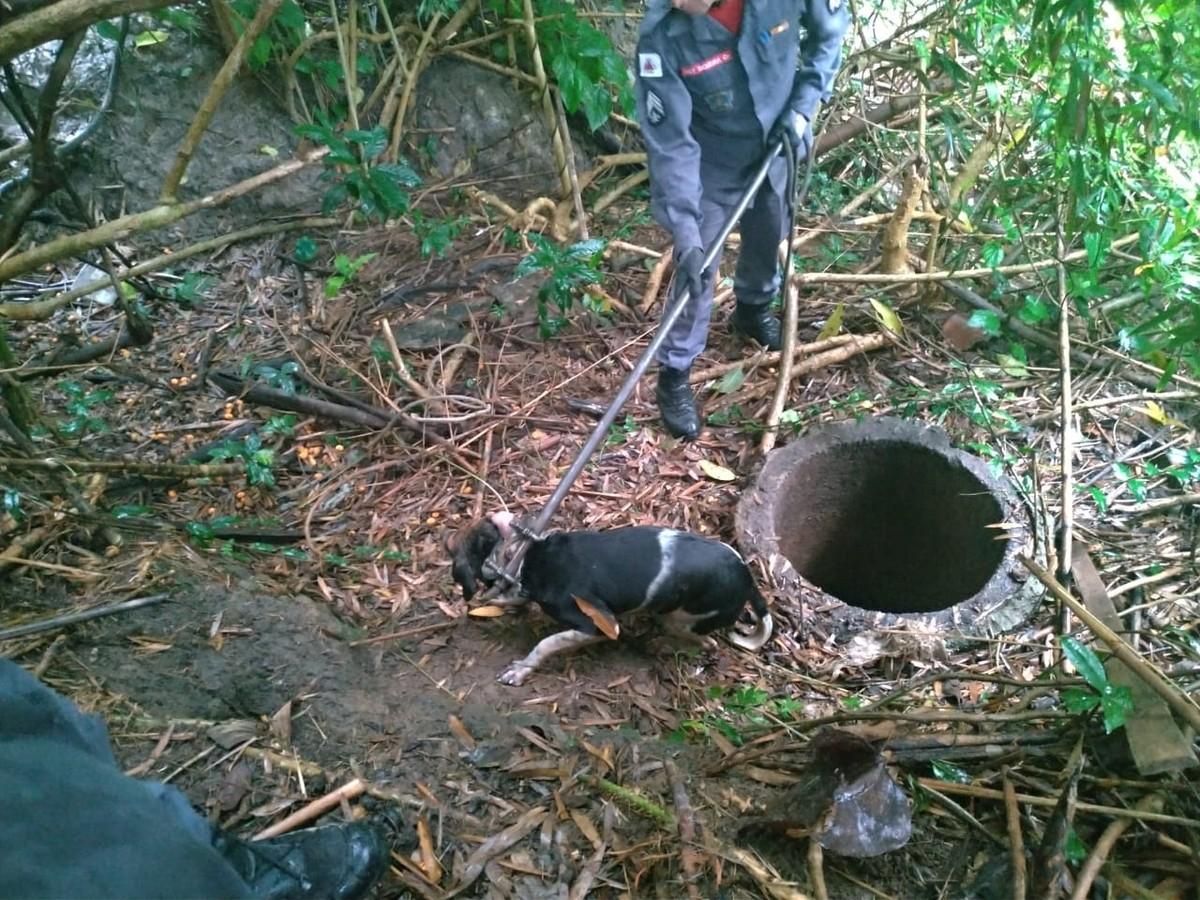 Cão é resgatado de fosso por bombeiros em Barbacena - G1