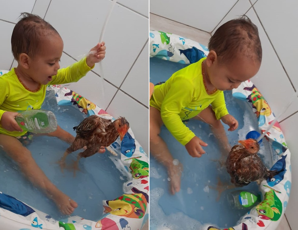 Bebê de Botucatu toma até banho com o franguinho de estimação — Foto: Arquivo pessoal/Josiane Frazão
