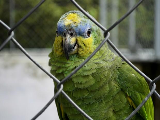 Animais foram cadastrados em um banco de dados com zoológicos de todo país (Fot Abinoan Santiago/G1)