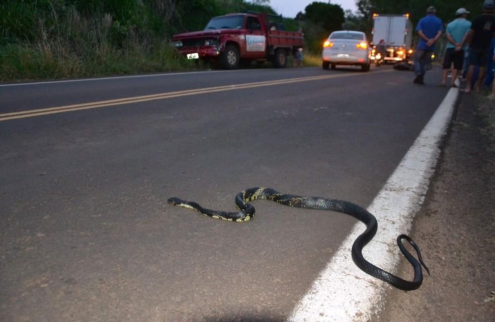 Animal teria assustado a vítima, que tentou desviar e acabou colidindo (Foto: Josias Marques/Portal In Foco RS)