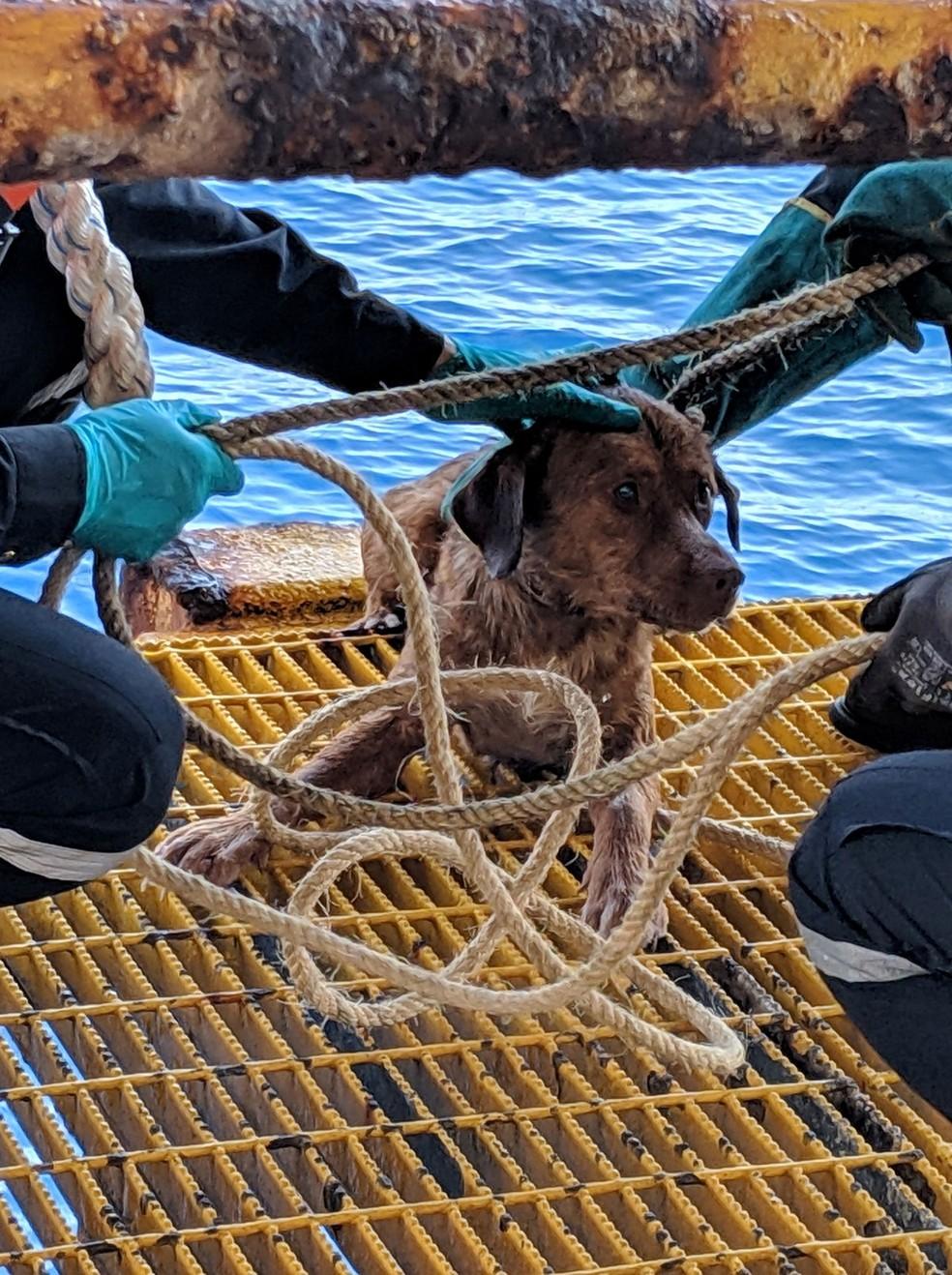 O cão sobrevivente após  o resgate — Foto: FACEBOOK / VITISAK PAYALAW/via REUTERS