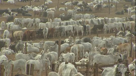 Preço do boi melhora, mas criadores gastam mais para engordar o gado