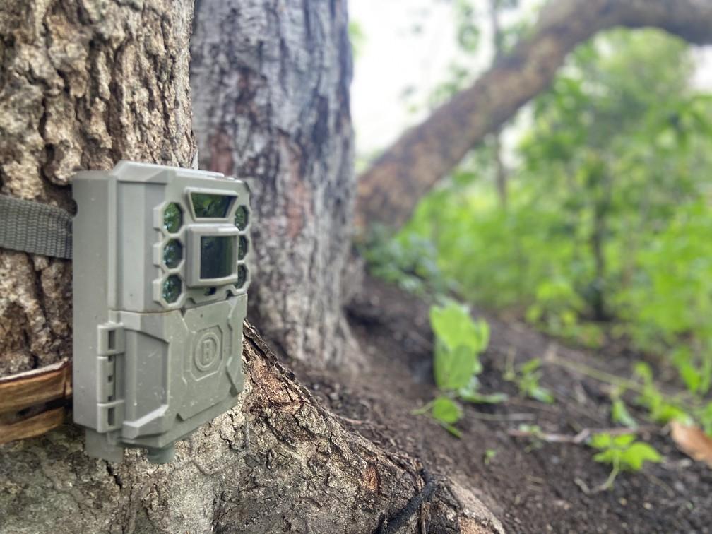 Armadilha fotográfica instalada em reserva no Pantanal de MT para acompanhar animais — Foto: Gabriela Schuck