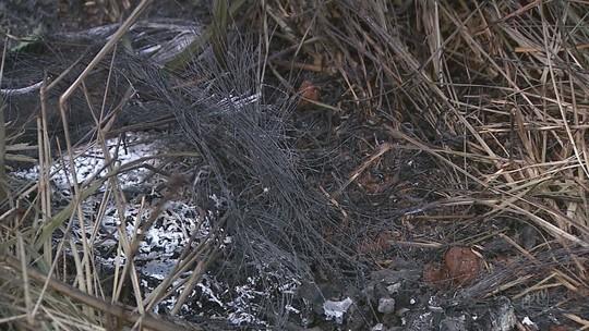 Corpo é encontrado carbonizado na zona rural de Jardinópolis, SP