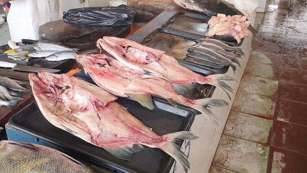 Venda de peixes até apresentou queda nos estados com maior incidência da síndrome de Haff — Foto: Marcelo Moreira/Rede Amazônica