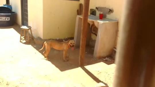 Casal de pitbulls ataca duas pessoas no Sol Nascente, no DF