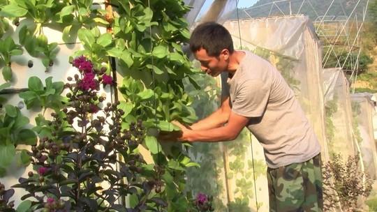 VÍDEO: Chineses fazem plantação vertical de vegetais