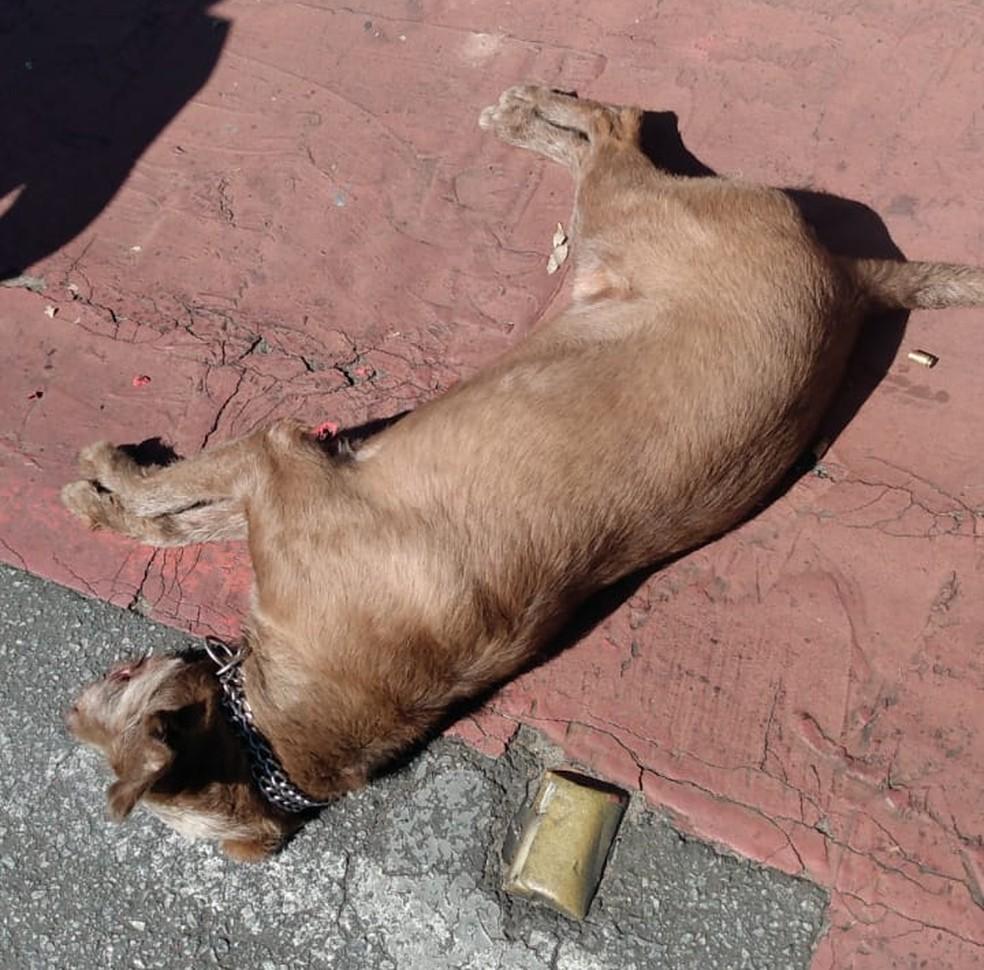 Cachorro foi morto com dois tiros, na região de Venda Nova, em BH — Foto: Redes sociais