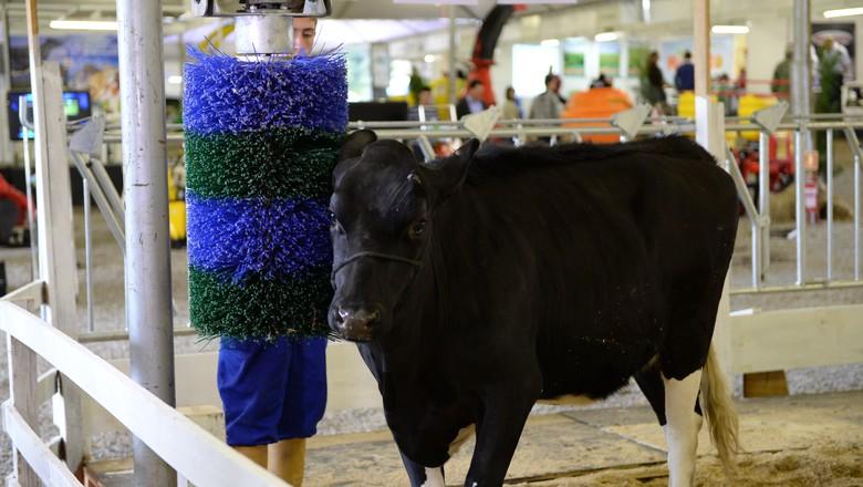 cocador_vaca_bem_estar_animal (Foto: Divulgação / Rural Show)