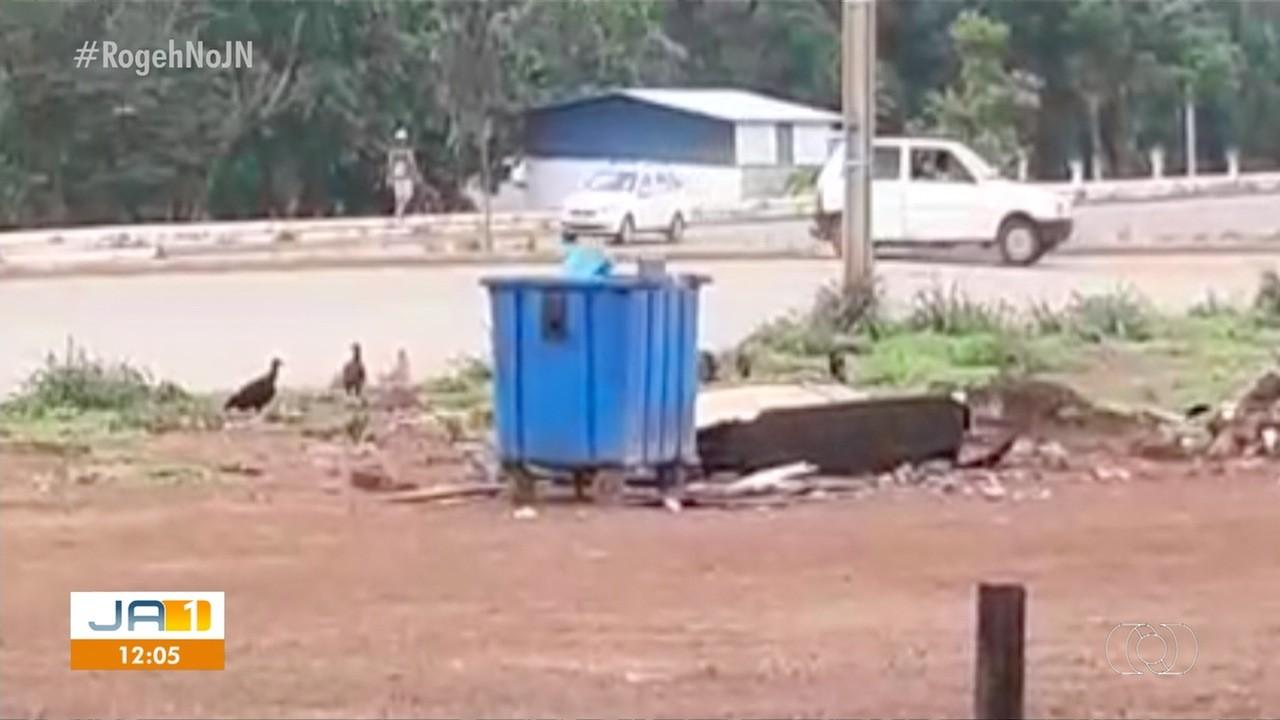Vídeo mostra urubus rodeando lixo a céu aberto na região norte de Palmas - Notícias - Plantão Diário