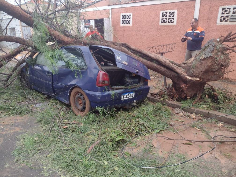 Temporal em Pirassununga provocou queda de árvore em cima de um carro  — Foto: Defesa Civil de Pirassununga