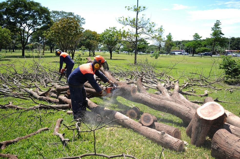 Funcionários da Novacap fazem poda de árvores em Brasília (Foto: Dênio Simões/Agência Brasília/Divulgação)