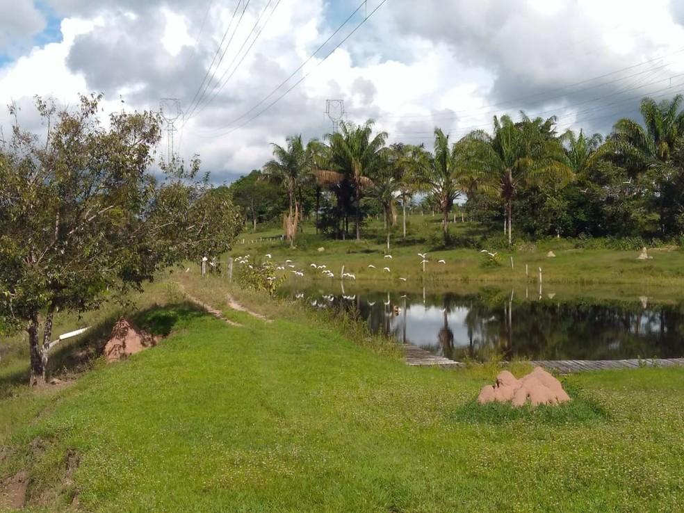 Ataque aconteceu em uma área de mata na Zona Rural da cidade.  — Foto: Débora Soares/Arquivo pessoal
