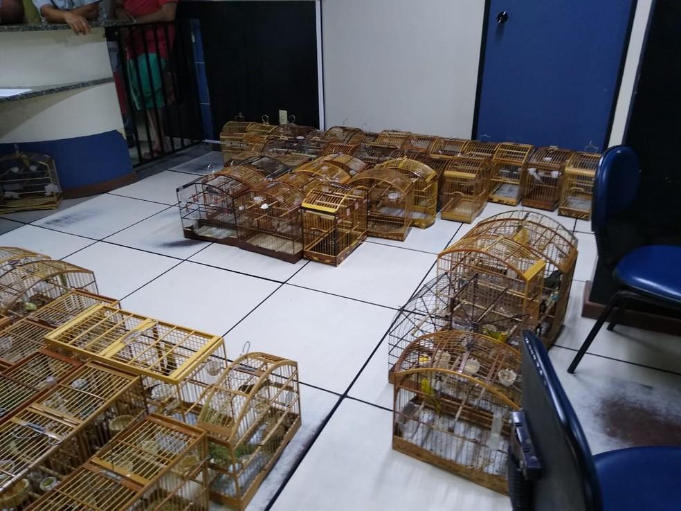 Gaiolas e pássaros foram apreendidos durante operação da UPAm em Itaocara, no RJ — Foto: Divulgação / 3ª UPAm