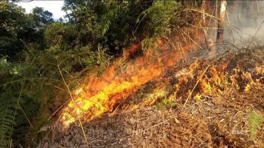 Estiagem em SC baixa nível dos rios e aumenta risco de queimadas de maior extensão
