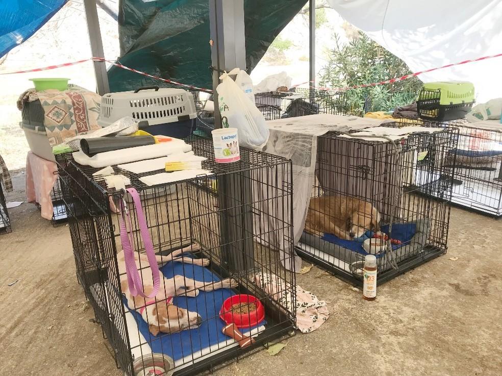 Imagem de cães no abrigo em Atenas para animais que foram afetados pelos incêndios — Foto: AFP