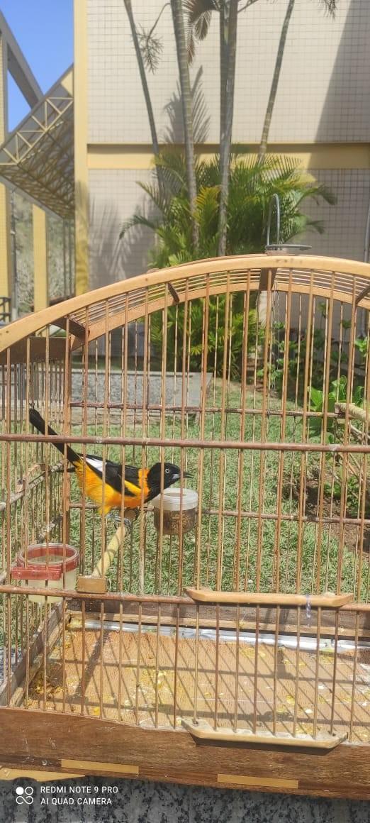 Cinco pássaros silvestres são resgatados de cativeiro em Petrópolis, no RJ